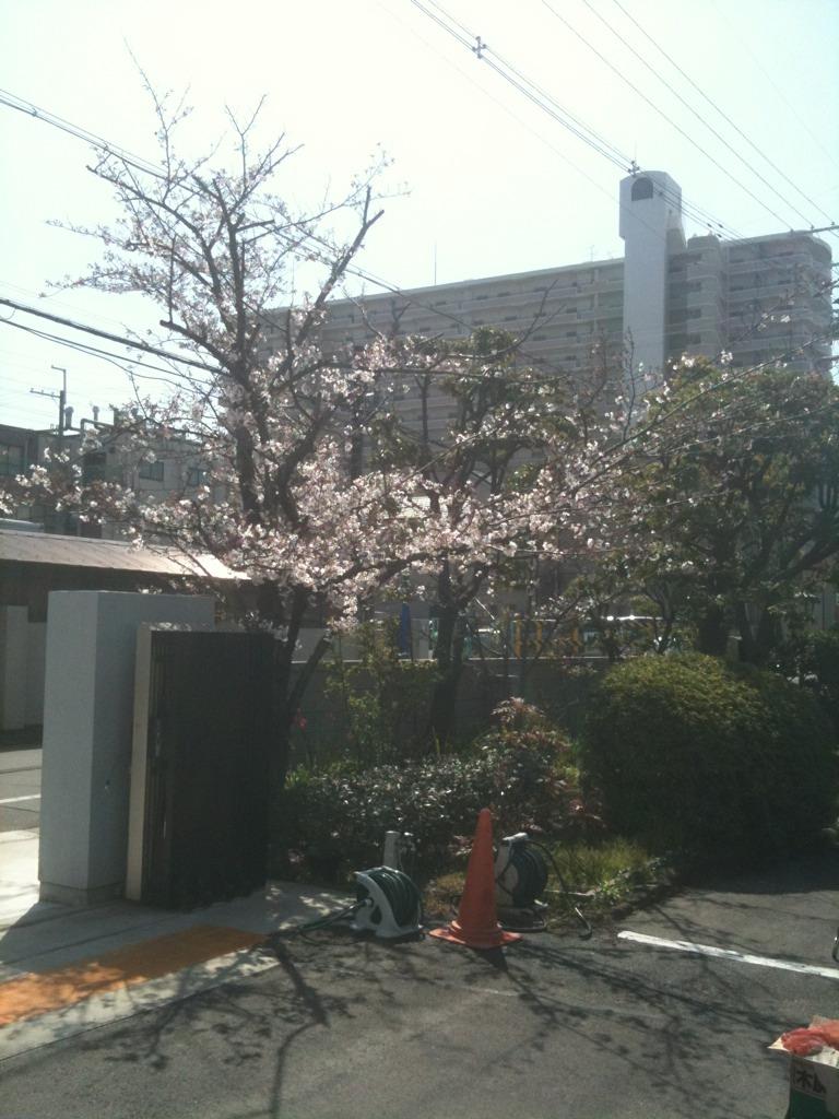 花見2.jpg